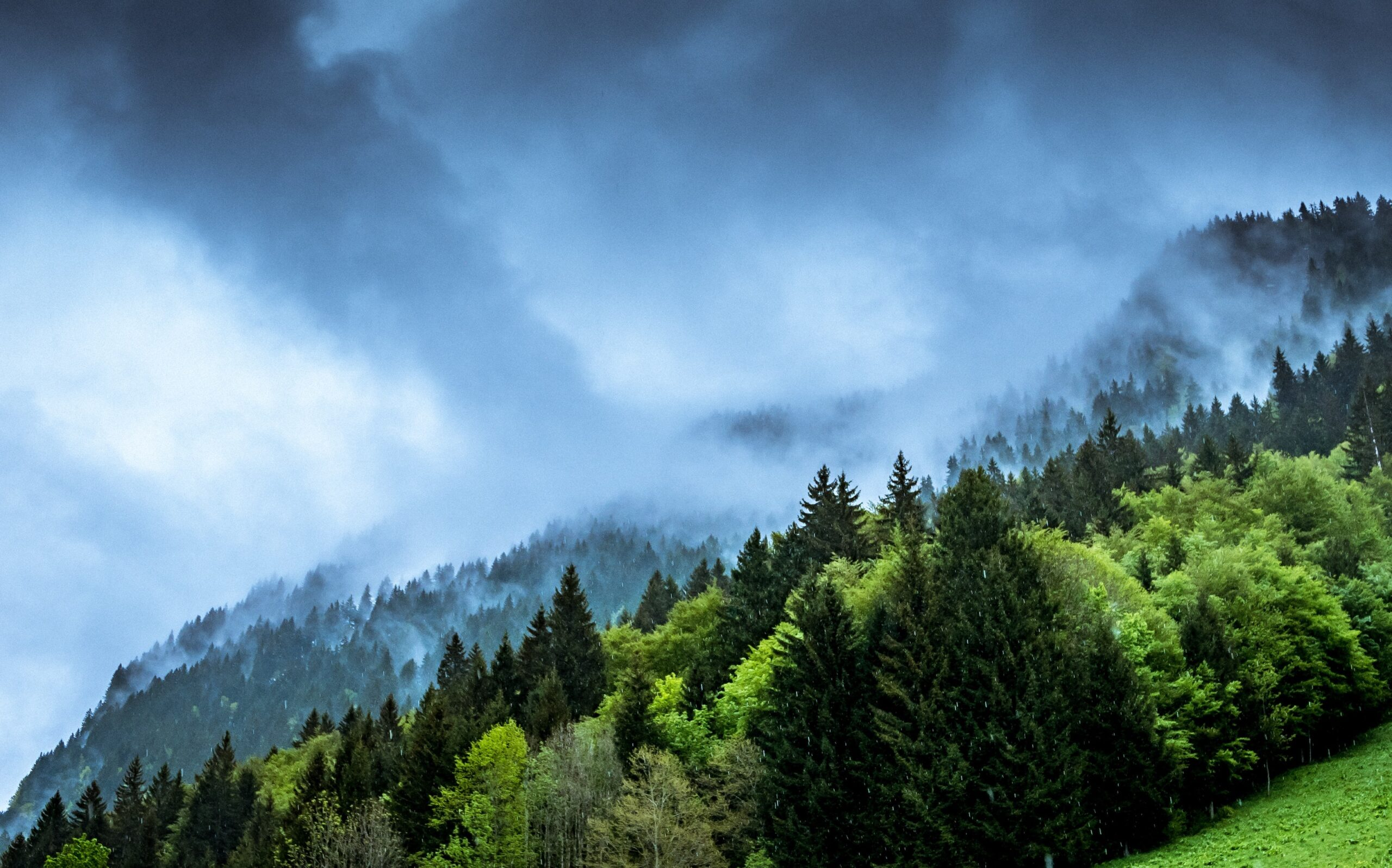 klíma és erdő